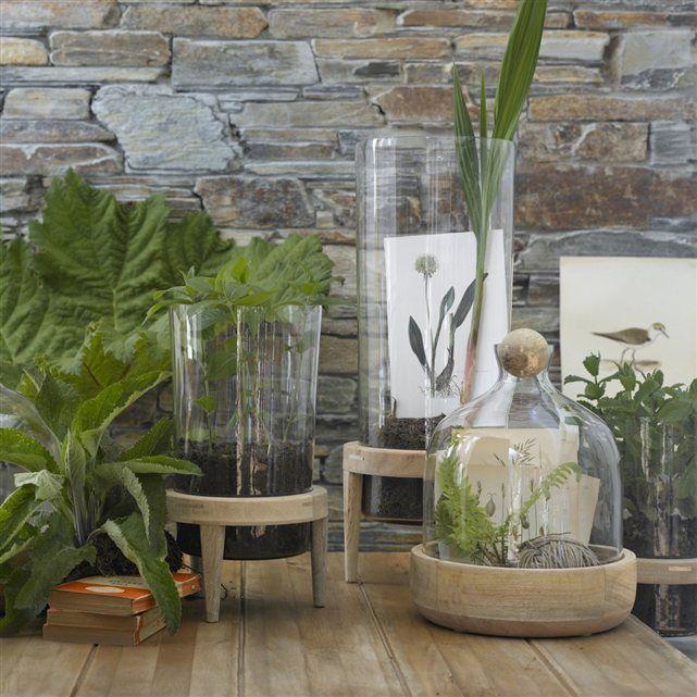 terrarium composé d'un vase en verre transparent à poser sur socle