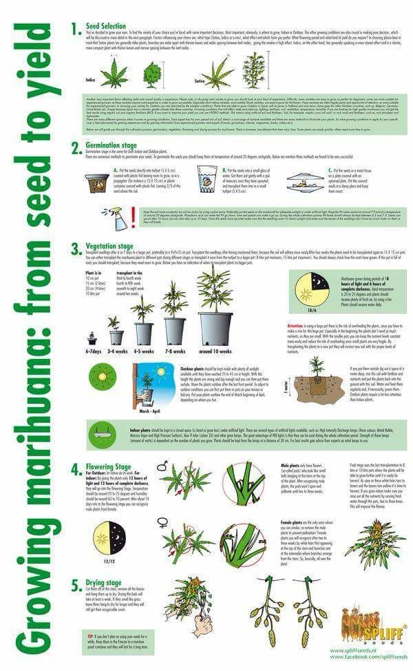 How to grow weed manual also best the wonderful world of cannabis images hemp bongs rh pinterest