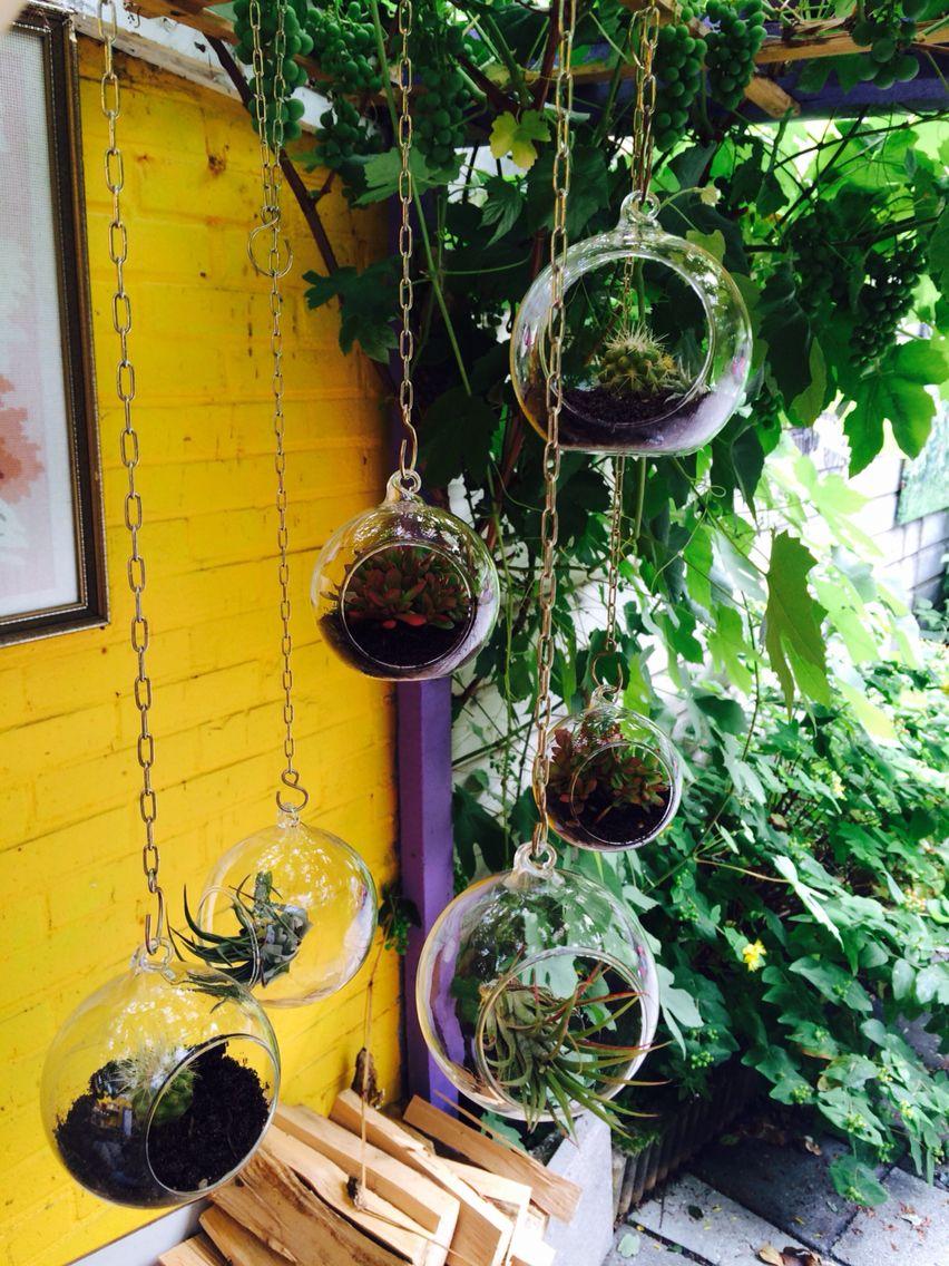 hoppies woon decocreatie glazen deco hang bollen met cactus vetplant en tillandsia hoppies. Black Bedroom Furniture Sets. Home Design Ideas