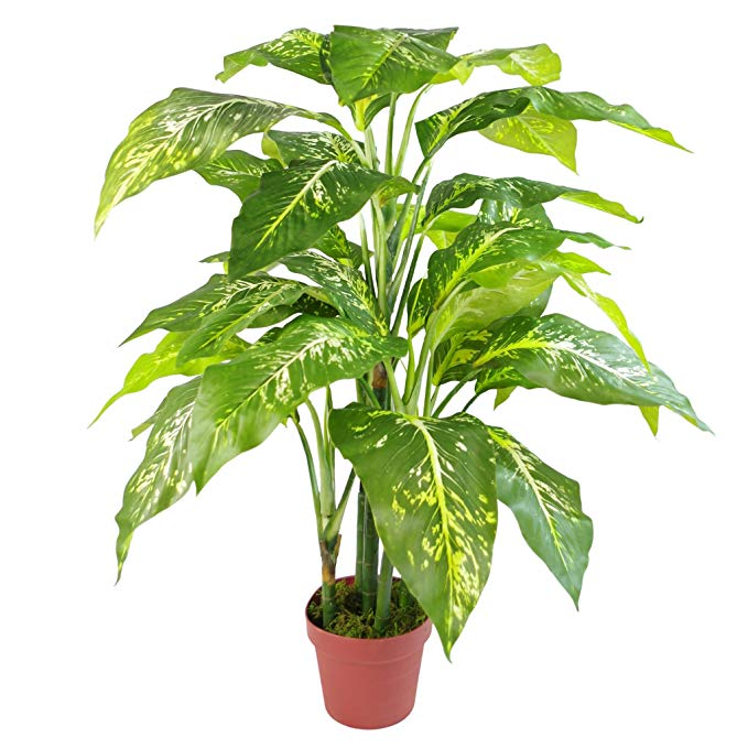 Leaf 100cm Large Fox's Aglaonema (Spotted Evergreen) Tree