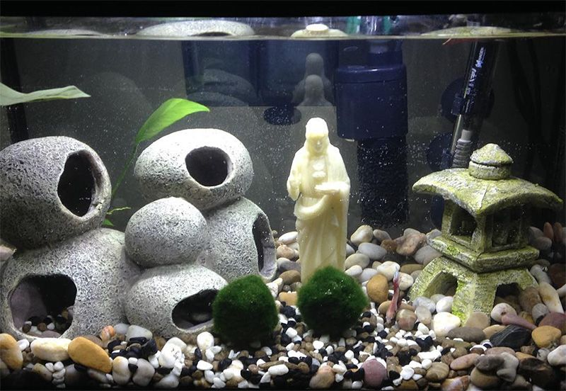5 cool fish tank themes that will inspire you fish tank