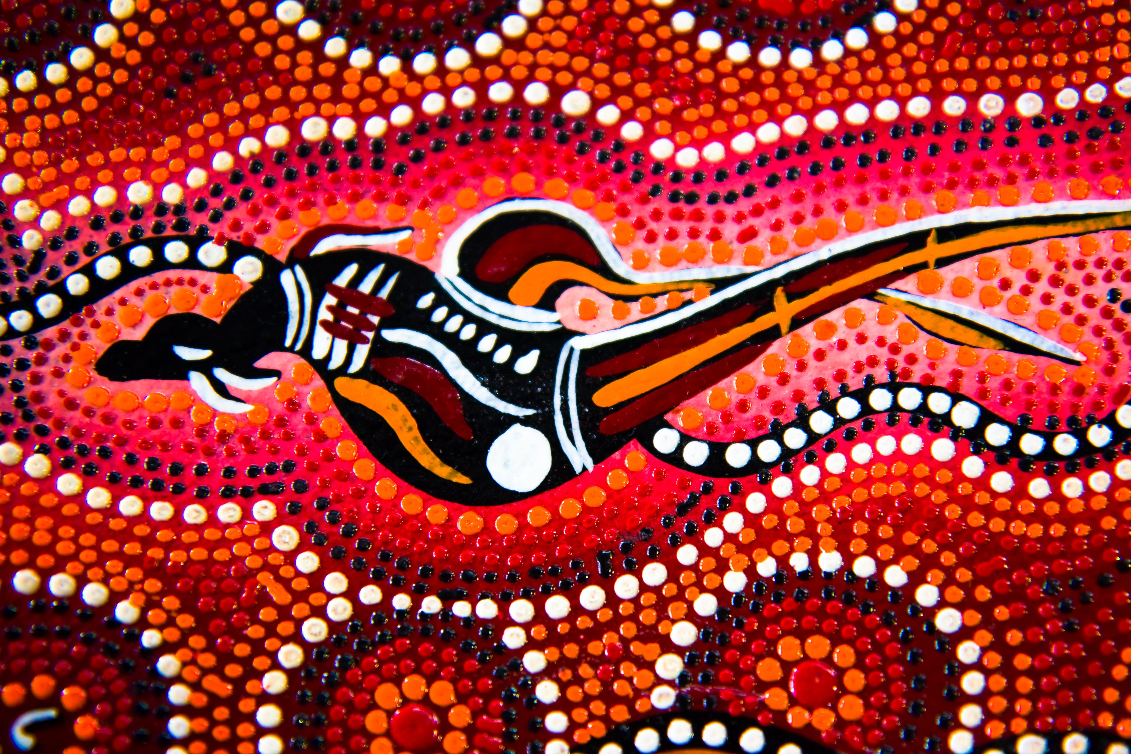Image Result For Aboriginal X Ray Art