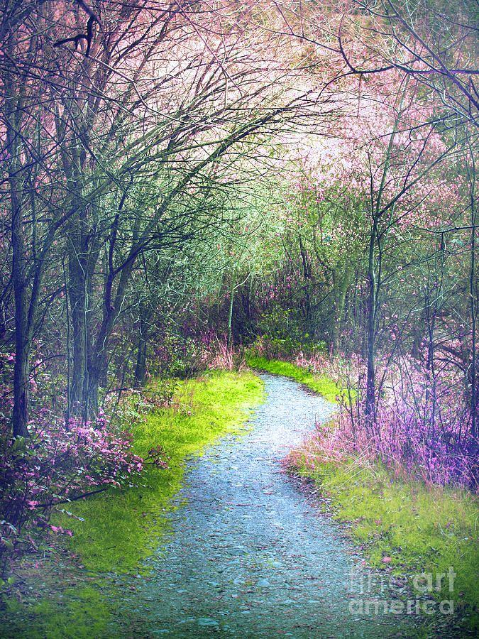 ✯ The Pastel Path