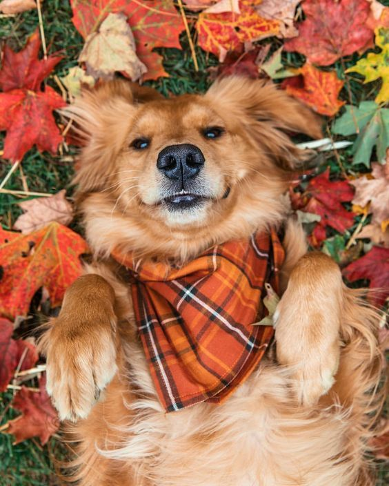 30 Dogs Who Are Loving The Fall Season [PICTURES] - Dogtime