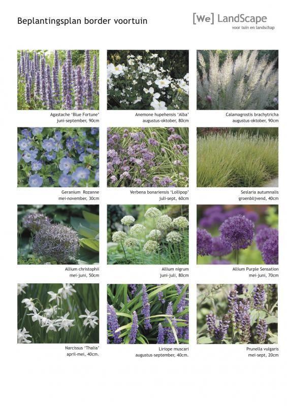 W 70cm Climbing Plants Grow Kit – Trough Pot /& Trellis Stakes L x 30cm