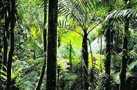 Ik vond dat dit plaatje een mooi voorbeeld was van het tropisch regenwoud want je kunt het heel goed herkennen aan de bomen enzo