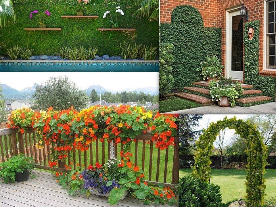 Enredaderas ocupan poco espacio y perfectas para decorar for Decorar jardines con plantas