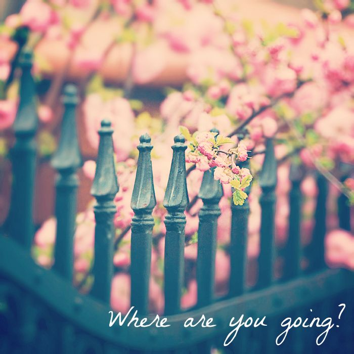 Dave Matthews Band - Where Are You Going?