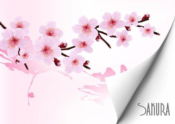 Latar Belakang Indah Bunga Sakura Vector Latar Belakang Vektor