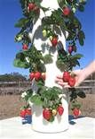 tower garden is a state of the art vertical aeroponic growing system ...