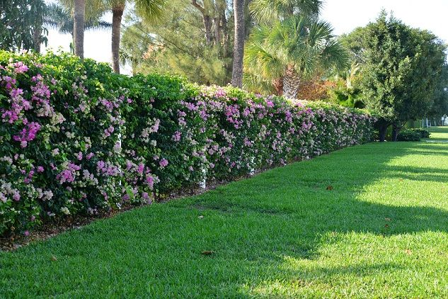 Pin By Amy Lin On House With Images Flower Hedge Privacy