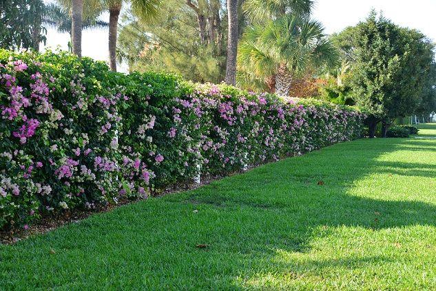 Flower Hedge Flower Hedge Garden Landscaping Outdoor Gardens