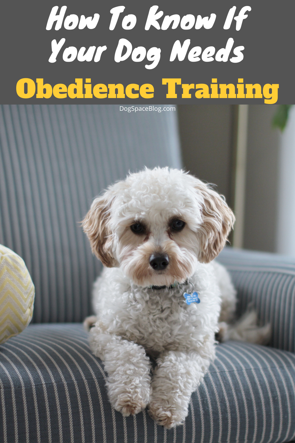 How To Know If Your Dog Needs Obedience Training Dogspaceblog In 2020 Dog Training Dog Deals Cute Dogs Breeds