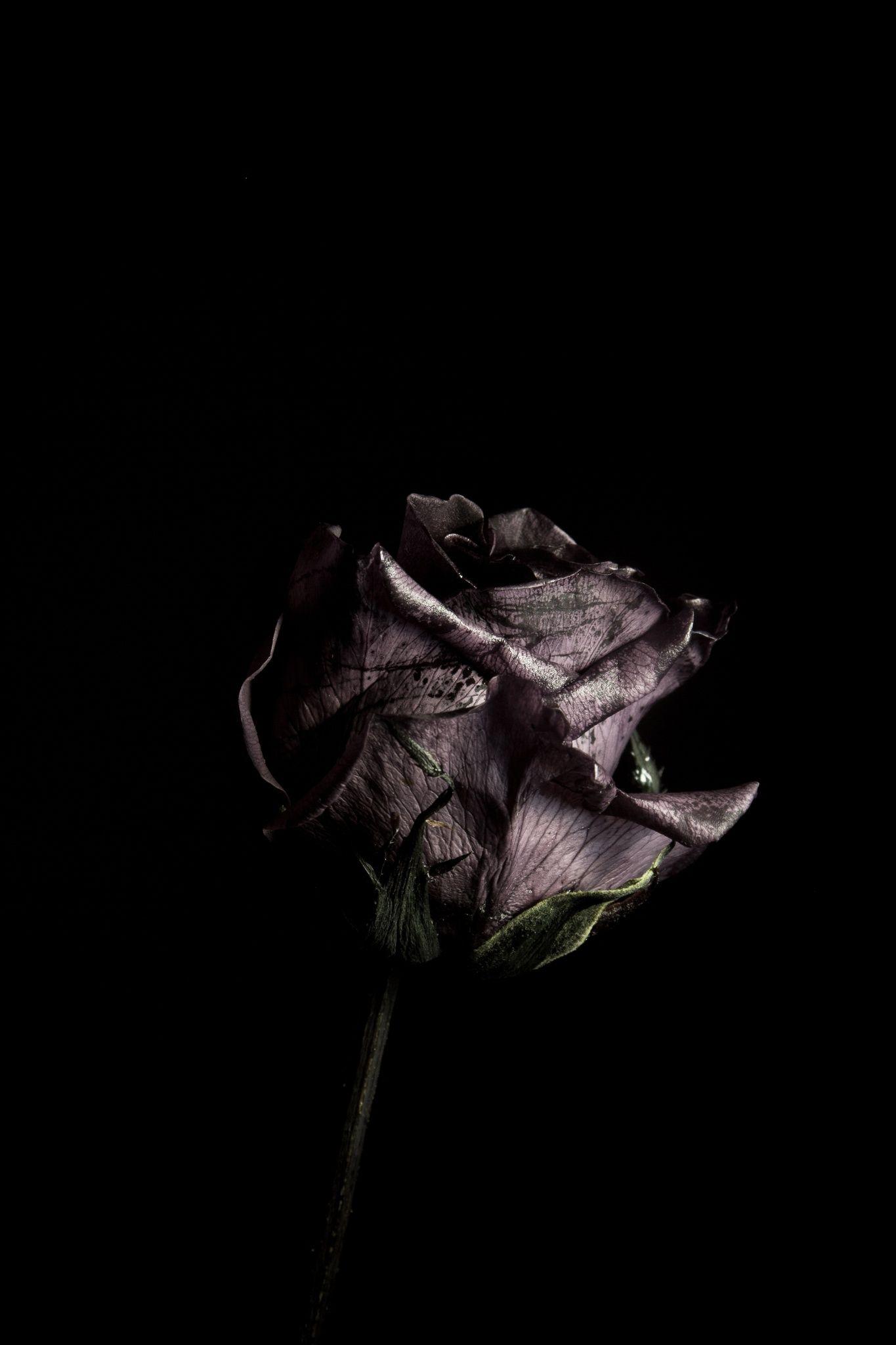 Get Good Black Wallpaper Iphone Dark Rose for iPhone 11 2020