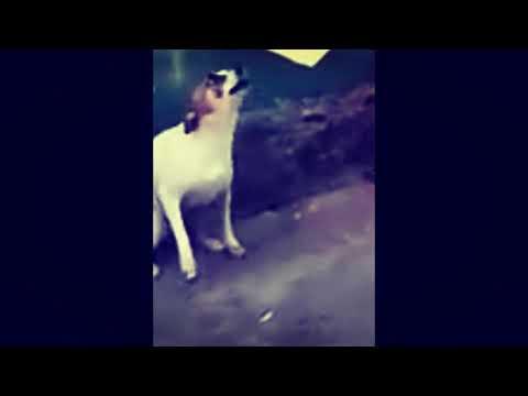 837 Chillido De Perro Remix 2 Youtube In 2021 Art Pandora Screenshot Pandora