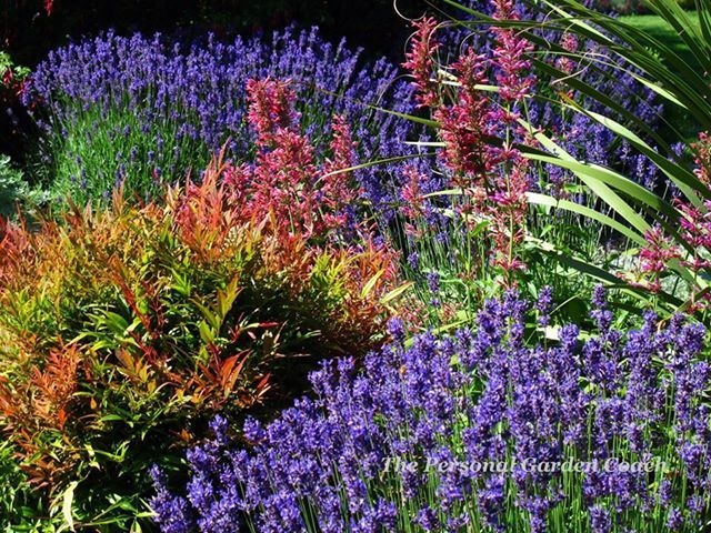 Maybe nandina and lavender can work together.  Agastache in the mix too.  https://fbcdn-sphotos-c-a.akamaihd.net/hphotos-ak-ash4/p480x480/1011310_10151580479914584_1081794404_n.jpg