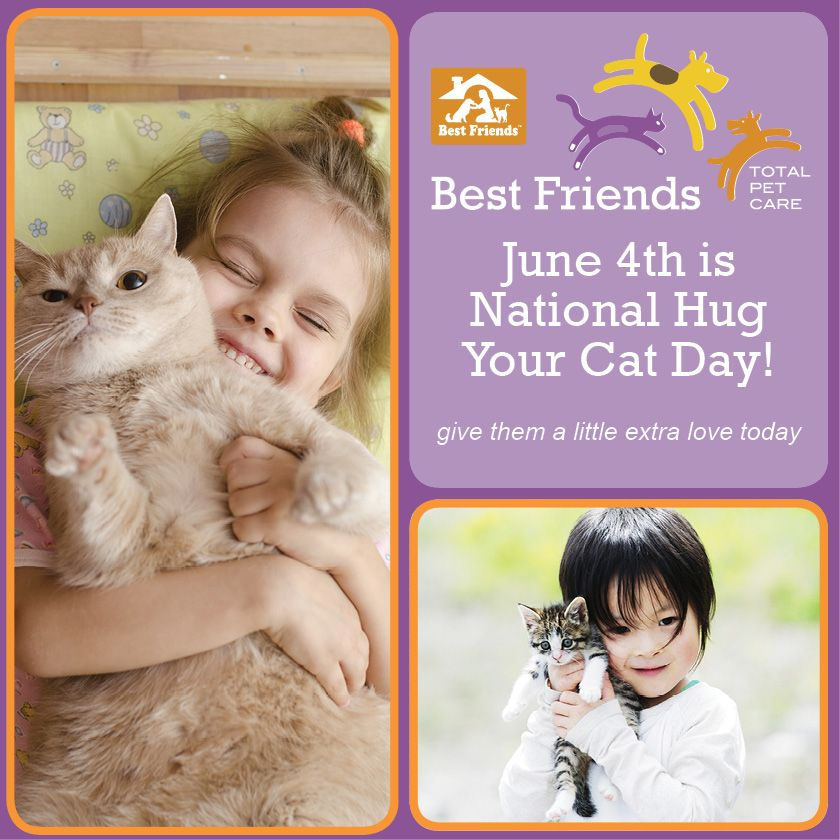 Happy National Hug Your Cat Day! cats hugs cute