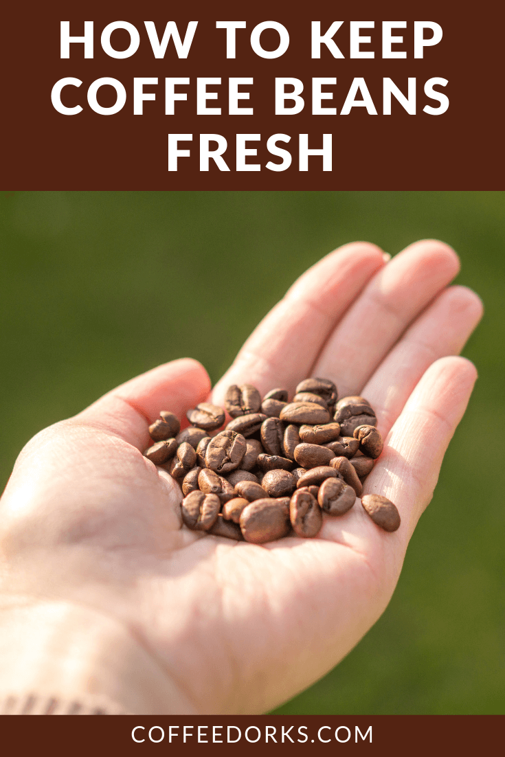 How to Keep Coffee Beans Fresh Coffee beans, Coffee