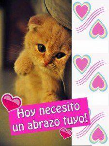 Imagen de amor de un gatito tierno con frase de un cariño especial