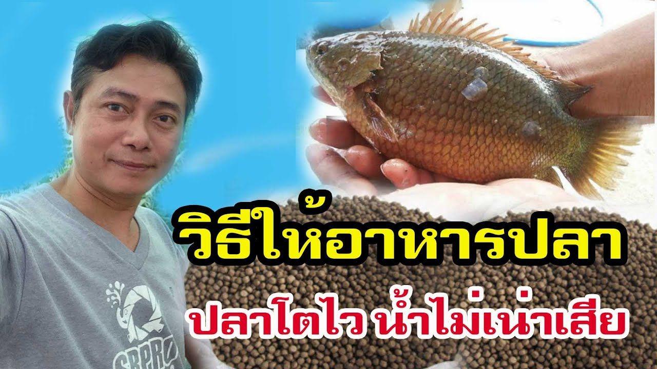 ว ธ ให อาหารปลา ปลาโตไว น ำไม เน าเส ย Youtube กบ