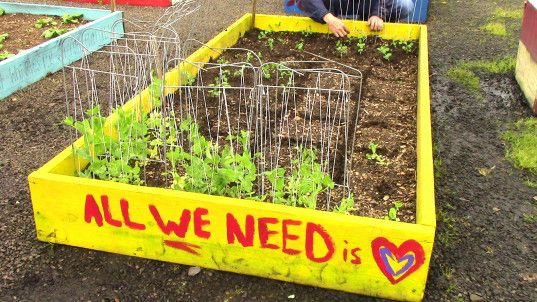 Homeless Folks Help Feed Their Entire Shelter With This Flourishing Rooftop Garden Organic Plants Organic Gardening Rooftop Garden