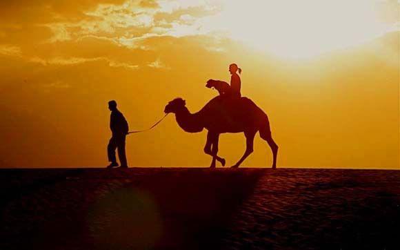 #viagem #cachorro #oscar Egito Camelo