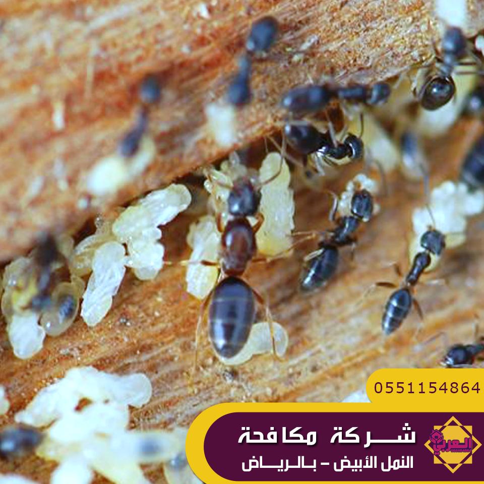 شركة مكافحة حشرات وسط الرياض Food Breakfast Riyadh