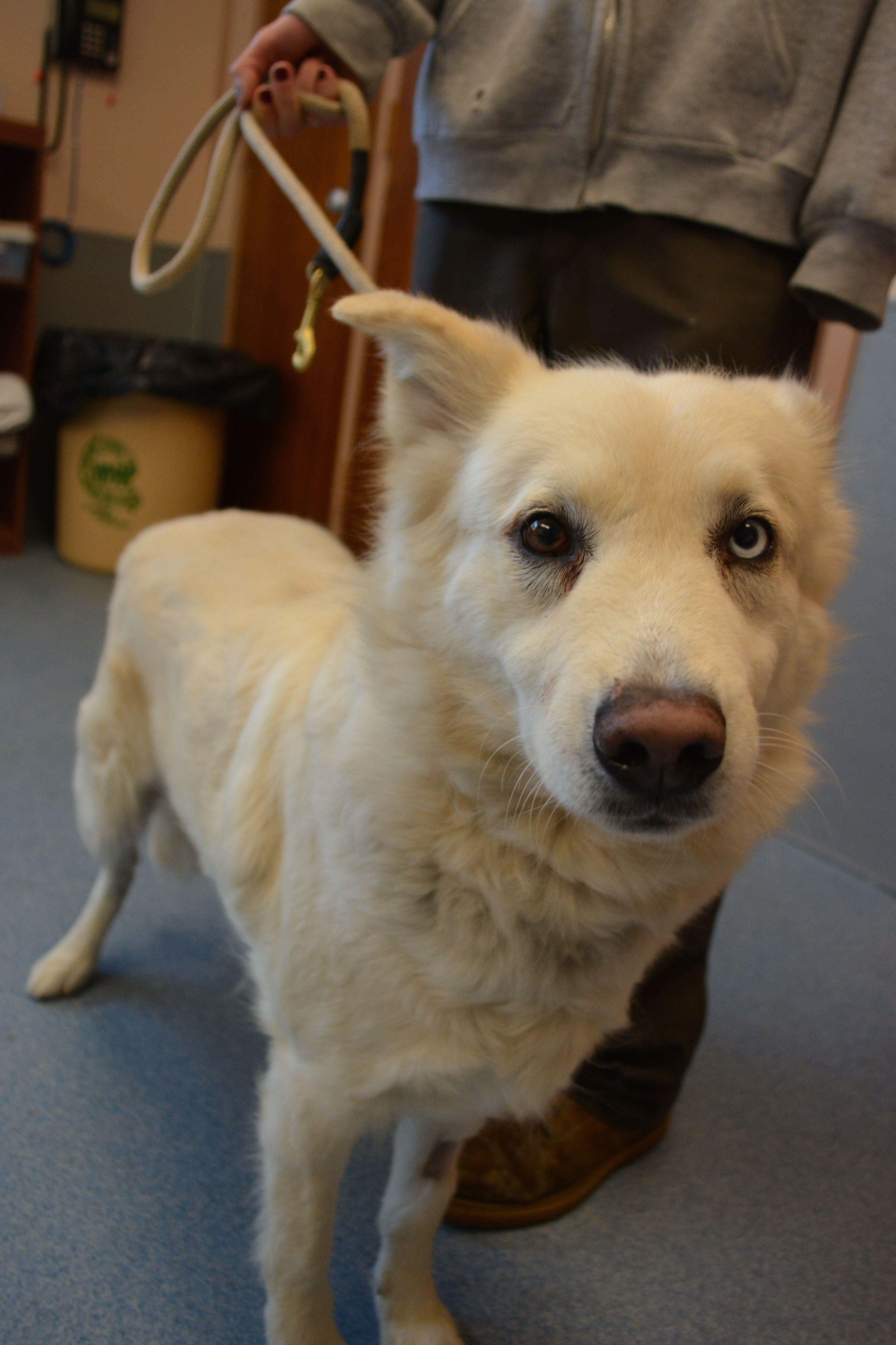 Sierra Dogs Animals Adoption