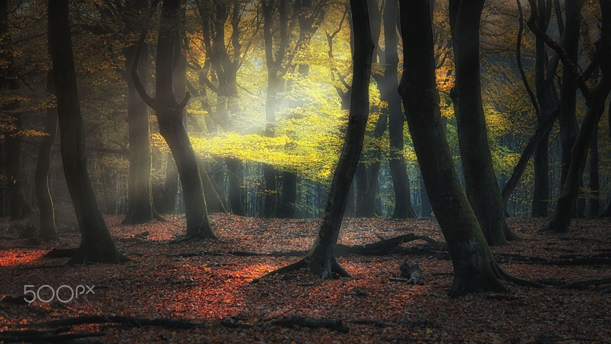 Trees dancing in the light - Thanks so much for visiting and voting. Press M