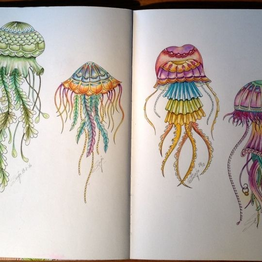johanna basford  colouring gallery  lost ocean coloring