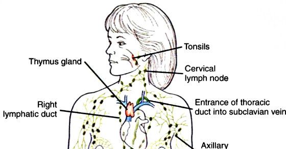 10 ways to empty your lymphatic system from toxins causing you to 10 ways to empty your lymphatic system from toxins causing you to feel weak thecheapjerseys Image collections
