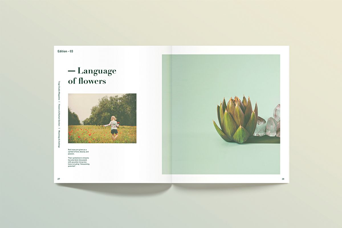 Ting™ — (branding/editorial) on Editorial Design Served