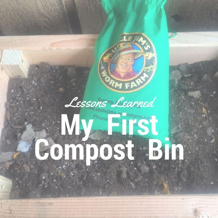 Lessons Learned From My First Worm Compost Bin
