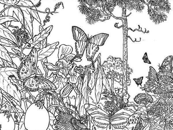 Rainforest Butterfly Coloring Pages | Butterfly Rainforest Insect ...