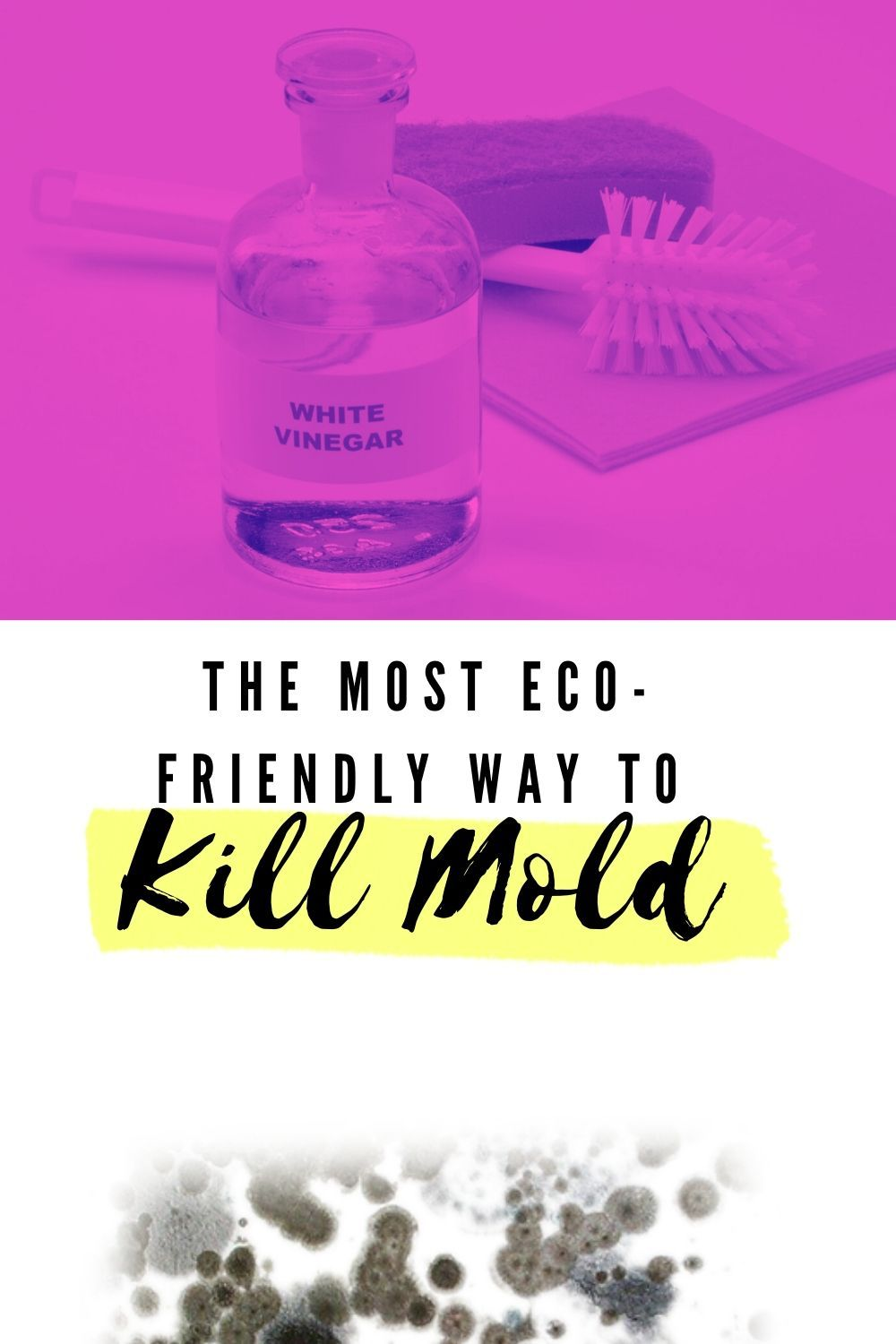 Does Vinegar Kill Mold? What You Need To Know in 2020