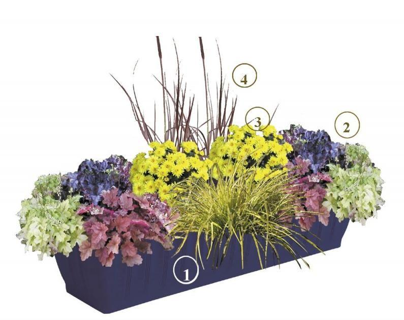 Výsadba na jesenné a zimné balkóny   Kvety a Záhrada