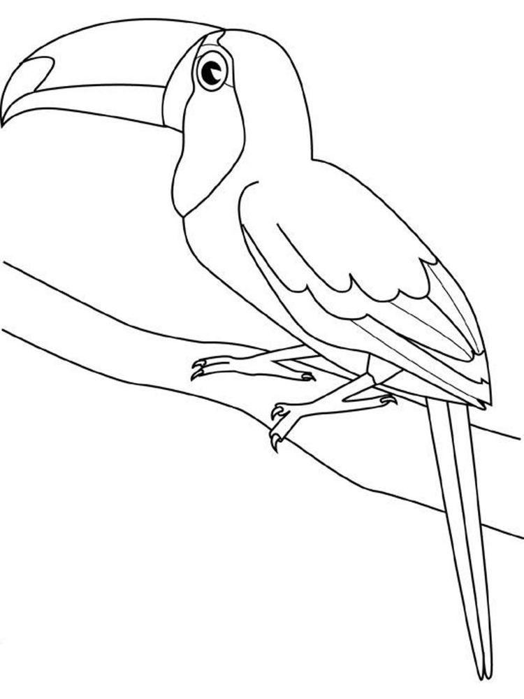 Toucan Bird Coloring Page For Kids Tucano Desenho