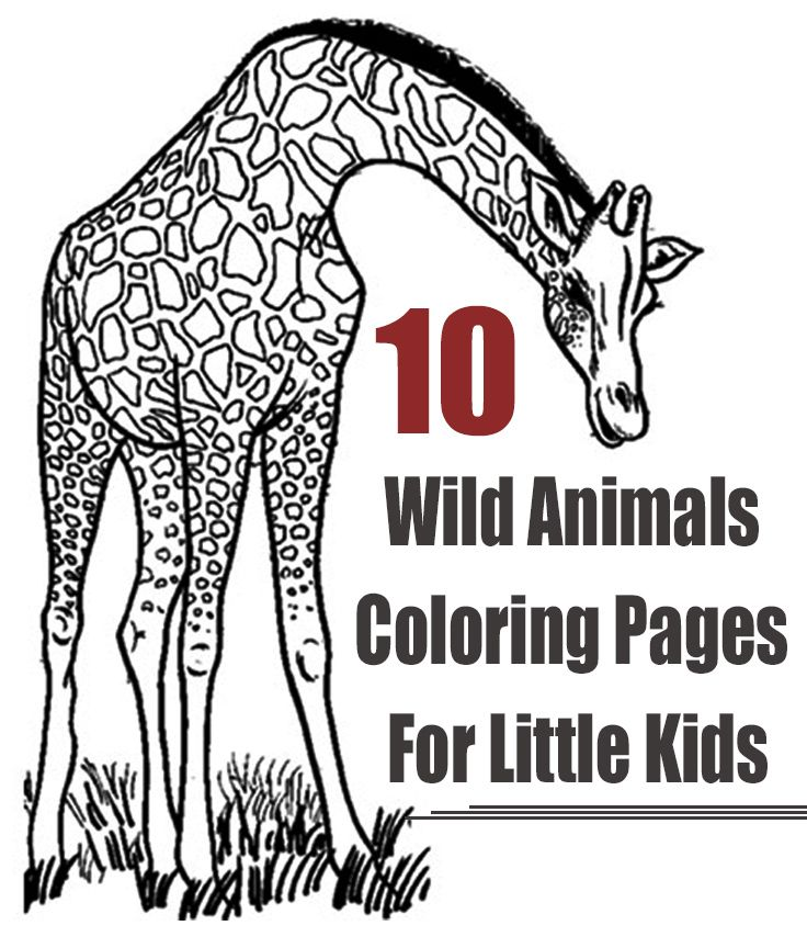 Top 10 Wild Animals Coloring Pages For Little Kids