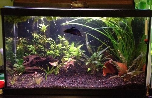 Stocking 10 gallon and nano tanks fish keeping for 10 gallon fish tanks