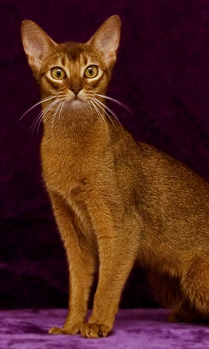 Pinterest For Business Marketing Expert Uk Specialist Gatos Cachorros Animales