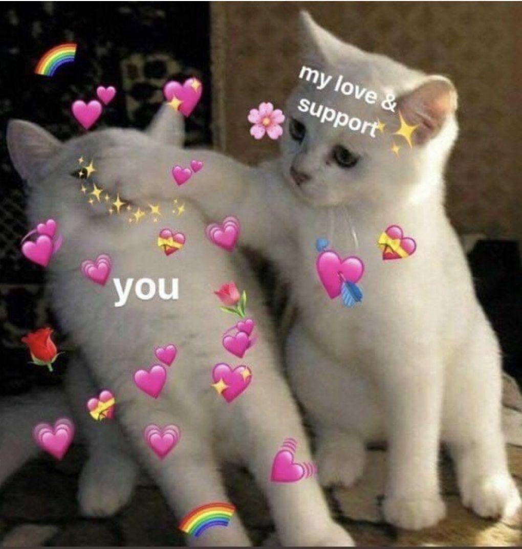 Kitty Love Cute Love Memes Love Memes Cute Memes