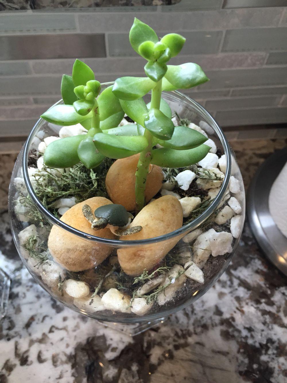 Just finished this cute little terrarium diy succulents terrarium