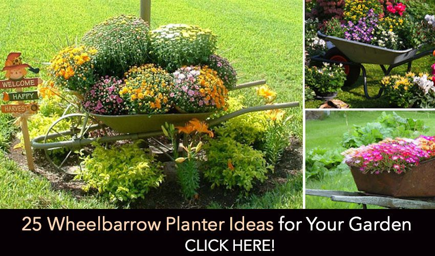 Over 300 of Our Best Gardening Ideas | Gardens, Fence planters and ...