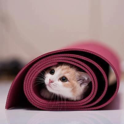 cat in a yoga mat