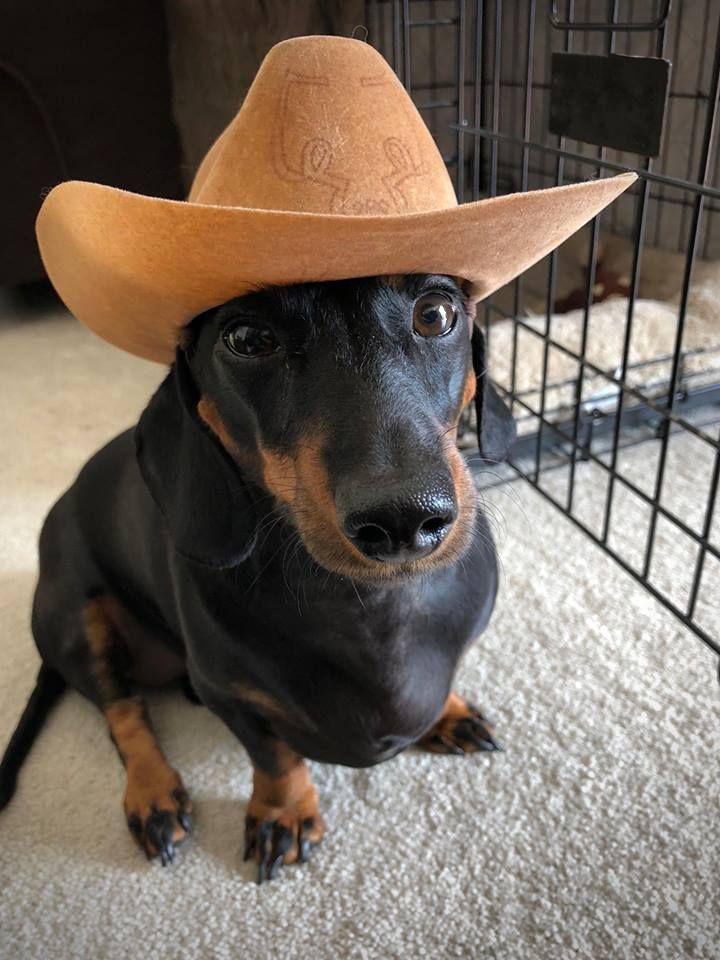 Mom says we are moving to San Antonio, Texas. Dachshund