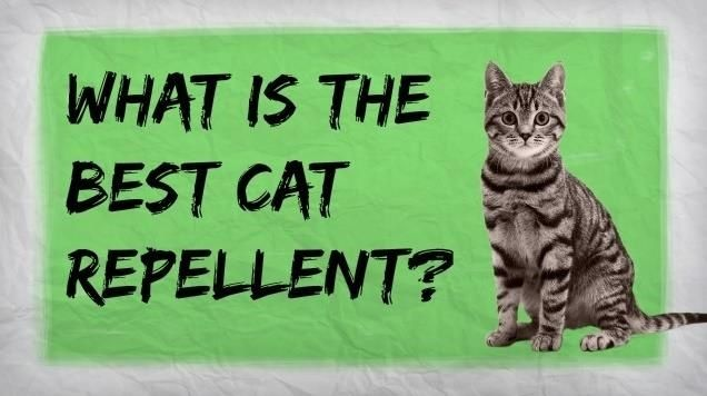 How To Make A Homemade Cat Repellent Home Remedies For
