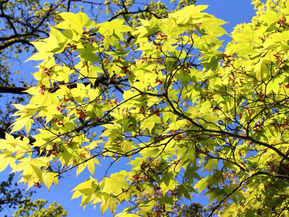 Gartenbaume Baum Fruit