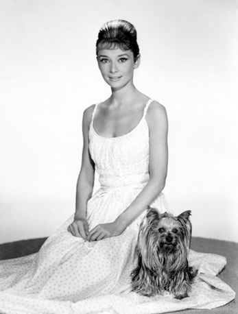 Audrey Hepburn and Yorkshire terrier Mr. Famous.