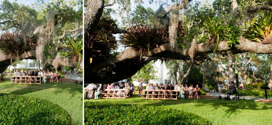 Marie Selby Gardens weddings  Get married under a huge shady tree and wow your guests!