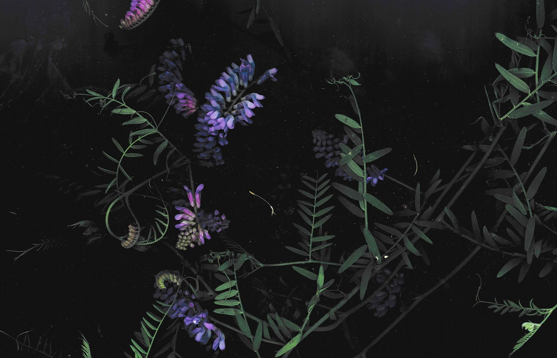 Desktop Wallpaper Flowers Aesthetic Di 2020